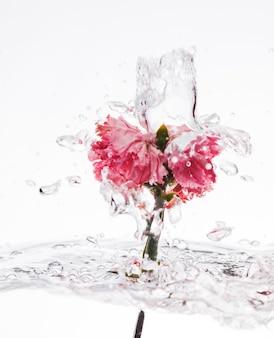 Cravo rosa cair na água