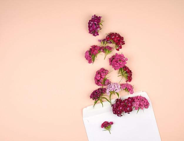 Cravo turco dianthus barbatus botões de flores e um envelope de papel branco