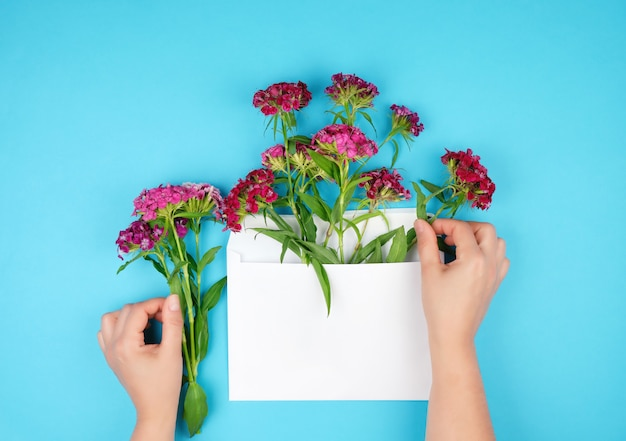 Cravo turco vermelho dianthus barbatus botões de flores e envelope de papel branco