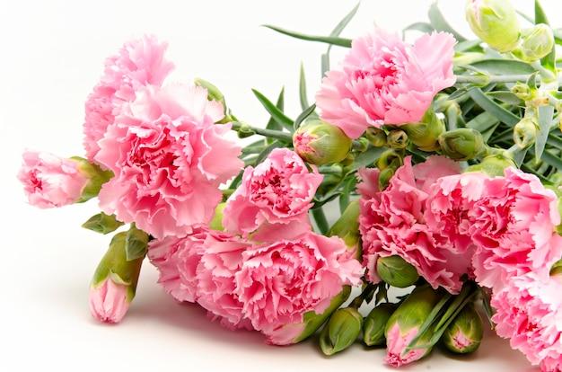 Cravos cor de rosa