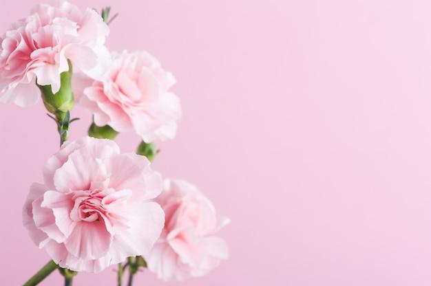 Cravos rosa em fundo