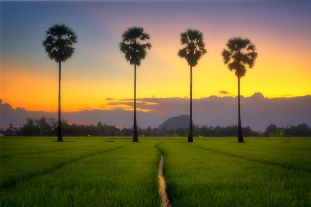 Crepúsculo após o pôr do sol no campo e palmeira.