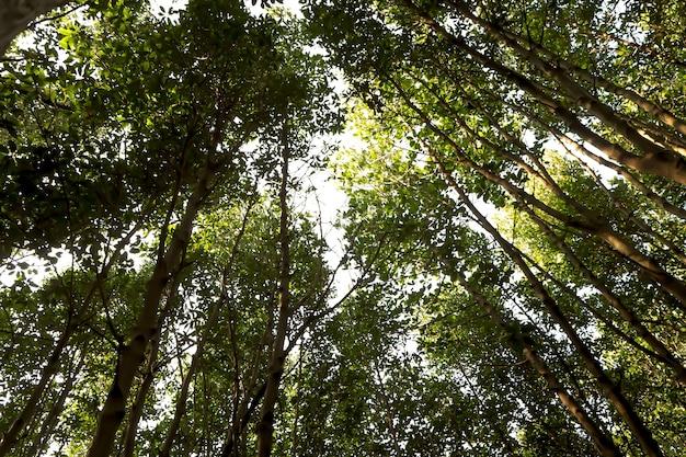 Crescimento da floresta aumentando em países com maior qualidade de vida