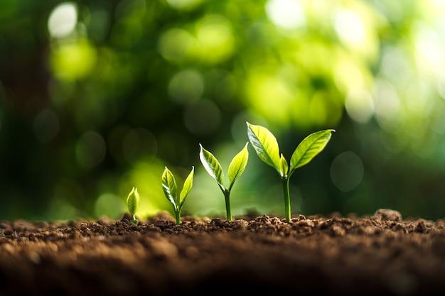Crescimento de árvores na natureza e bela iluminação matinal
