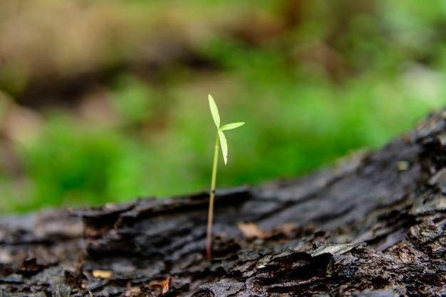 Crescimento de broto verde
