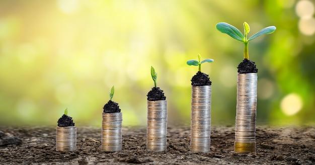 Crescimento de dinheiro economizando dinheiro. moedas da árvore superior ao conceito mostrado