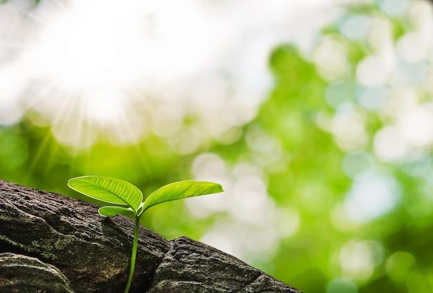 Crescimento de pequena árvore na floresta e pedra