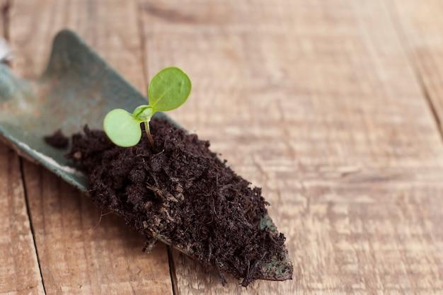 Crescimento de plantas jovens no solo. primavera de jardinagem.