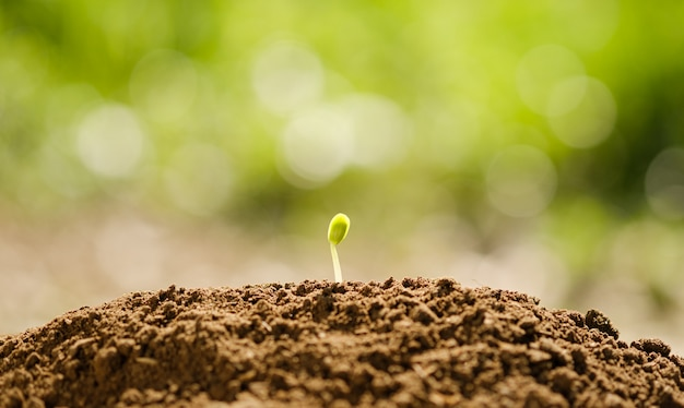 Crescimento de semeadura de plantas agrícolas no solo