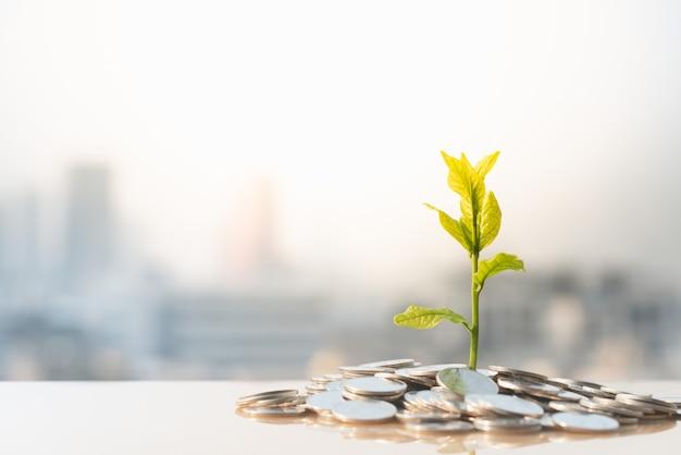 Crescimento financeiro, planta em moedas de pilha com fundo de paisagem urbana