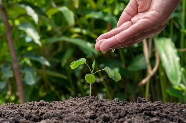 Crescimento vegetal ou germinação de sementes e mãos regando plantas no fundo borrado da natureza verde.