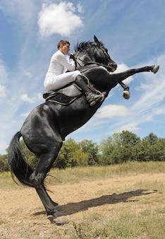 Criação de cavalo