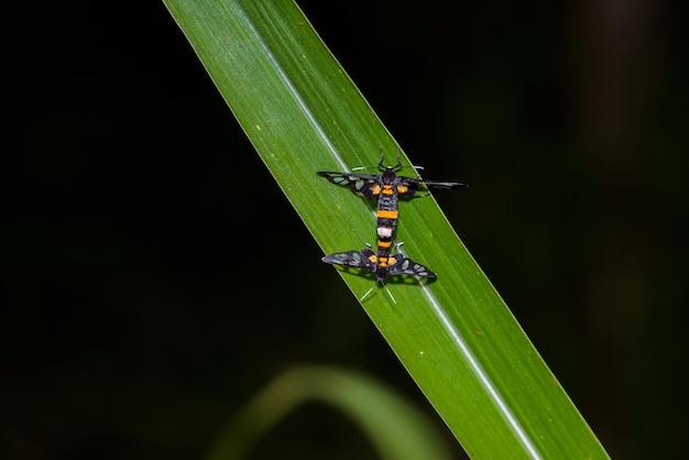 Criação de insetos na folha verde