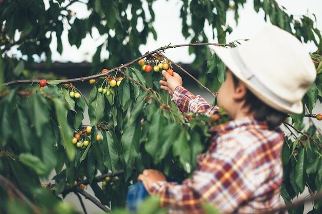 Criança caucasiana pegando cerejas da árvore em um dia ensolarado