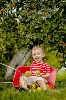 Criança colhendo maçãs em uma fazenda. menino brincando no pomar de macieira. criança colhe frutas e coloca em um carrinho de mão
