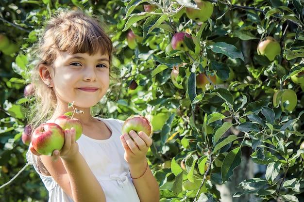 Criança com maçãs no jardim de verão. foco seletivo. pessoas.