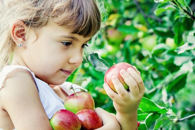 Criança com maçãs no jardim de verão. foco seletivo.