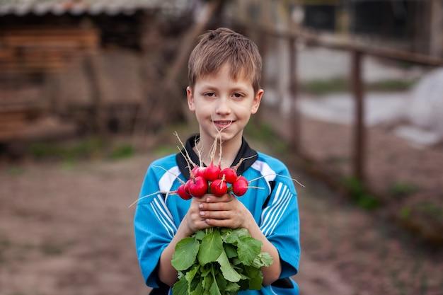 Criança com rabanete orgânico fresco nas mãos. comida saudável.