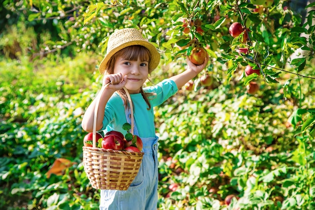 Criança com uma maçã. foco seletivo. jardim.