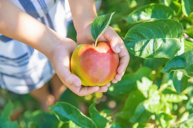 Criança com uma maçã no jardim