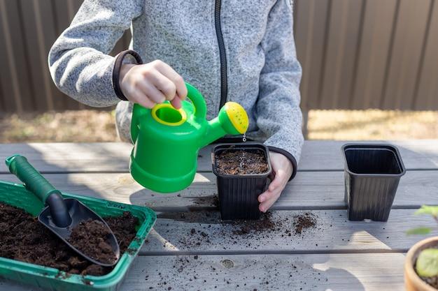 Criança derrama a água de um vaso de mudas de regador com sementes de plantas, de pé sobre uma mesa de madeira. infância feliz e despreocupada.
