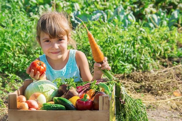 Criança e legumes na fazenda. foco seletivo.
