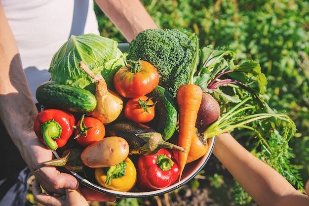 Criança e pai no jardim com legumes nas mãos.
