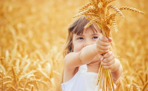 Criança em um campo de trigo. foco seletivo.