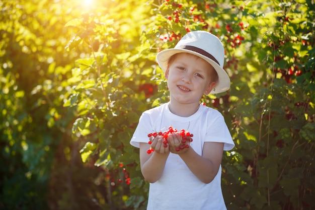 Criança engraçada que pegara corintos vermelhos do arbusto de corinto em um jardim.