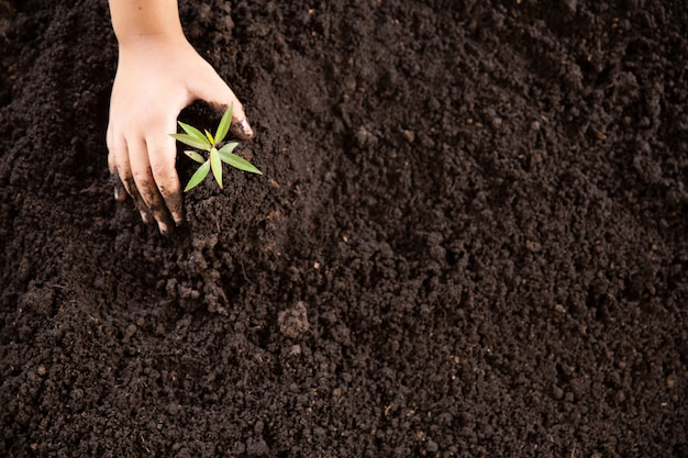 Criança mãos segurando e cuidar de uma jovem planta verde