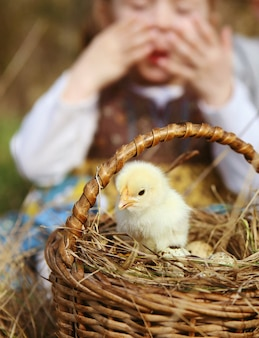 Criança olha para um jovem frango amarelo fofo