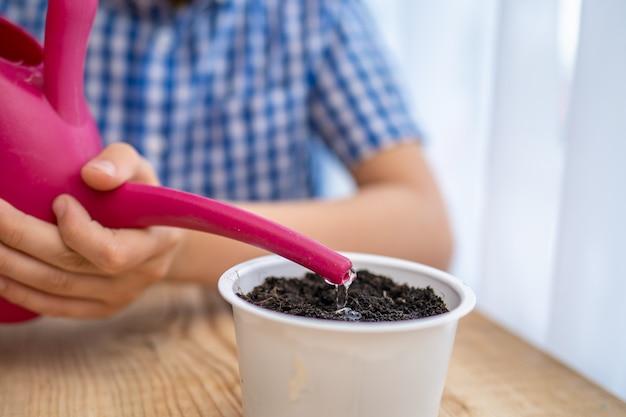 Criança pequena está segurando um regador com água e regar uma semente plantada.