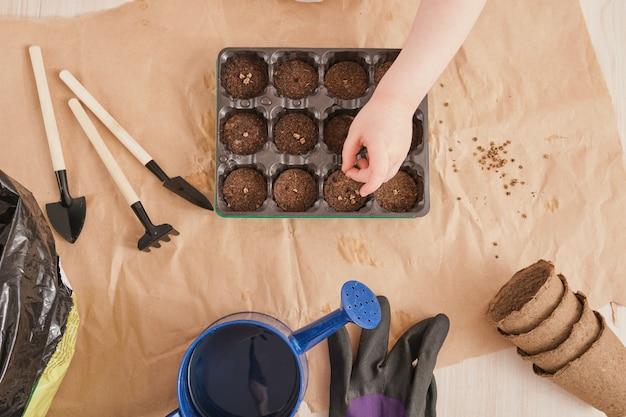 Criança planta sementes em uma pequena estufa de mudas, recipiente de mudas com comprimidos órfãos, itens de jardim na vista de cima da mesa