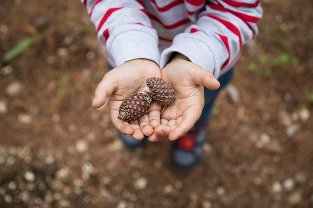Criança, segura, pinhas, em, seu, mãos