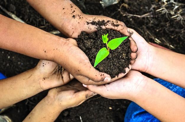 Criança segurando a planta jovem nas mãos