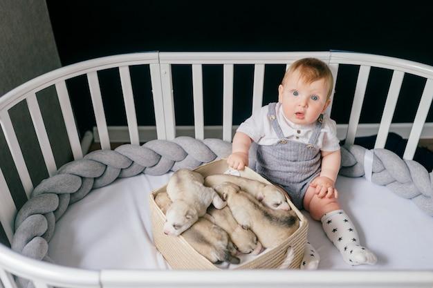 Criança sentada no berço com filhotes husky recém-nascidos na caixa