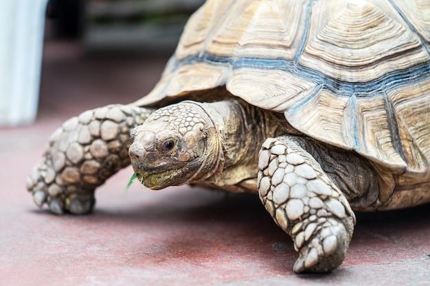 Crianças, alimentação, tartaruga, em, borgonha edimburgo, e, mundo inseto., foco selecionado
