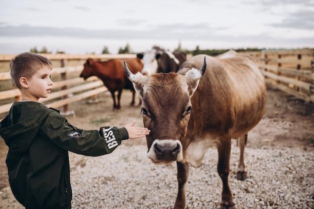 Crianças alimentam a vaca na fazenda