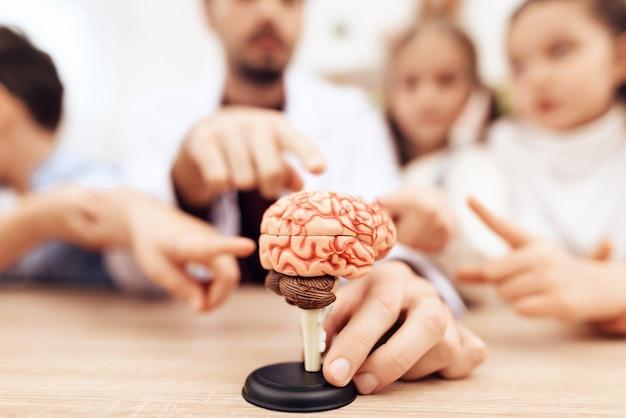 Crianças com professor olhando para um modelo do cérebro humano.