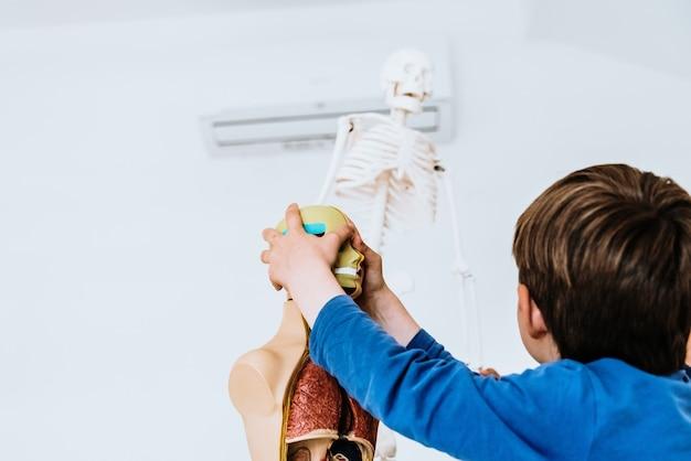 Crianças em sala de aula usando um modelo anatômico do corpo humano.