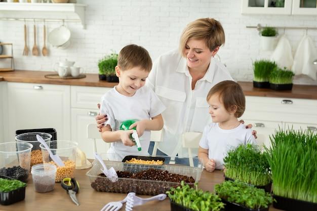 Crianças pequenas ajudam a mãe na cozinha a plantar micro-verdes, regar e encher