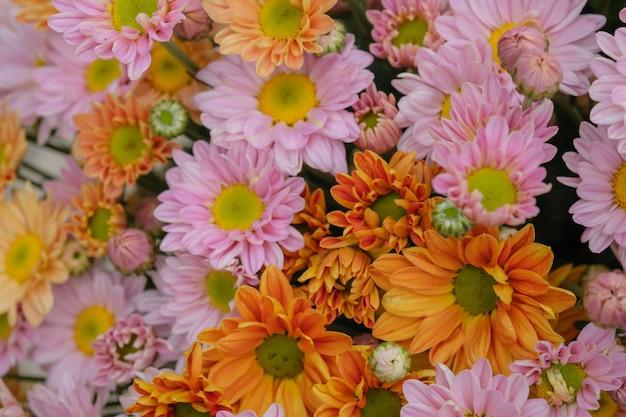 Crisântemo de flores coloridas feito com gradiente de fundo