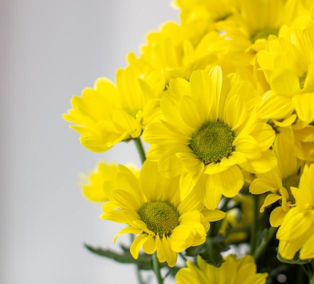 Crisântemos amarelos em um buquê em um fundo diferente. foto de alta qualidade