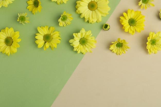 Crisântemos amarelos sobre fundo de dois tons, espaço para texto.