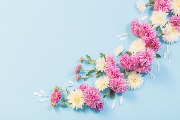 Crisântemos brancos e rosa em papel azul
