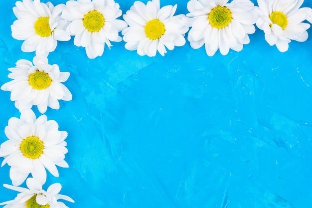 Crisântemos em fundo azul