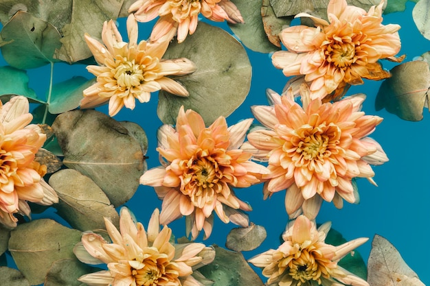 Crisântemos laranja pálidos na água colorida azul