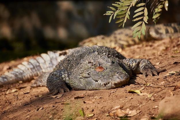 Crocodilos são animais assustadores