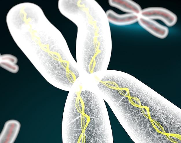 Cromossomos x