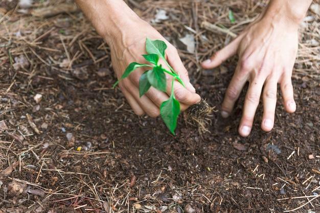 Crop mãos plantng brotam na sujeira